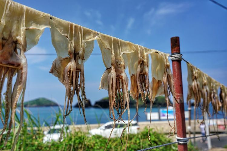 Octopuses drying on ropes against sea