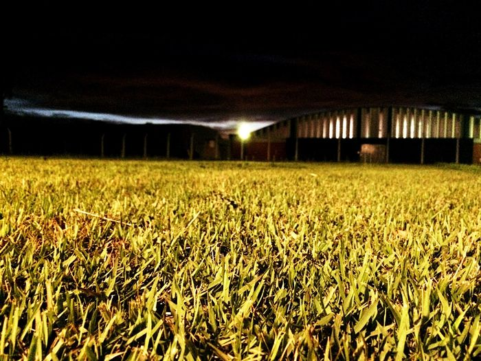 Crops growing on field against sky at night