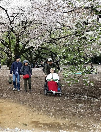 Shinjuku Gyoen National Garden 桜花 Sakura Cherry Blossoms 1500 Cherry Trees 20 000 Trees Spring 2015 Travel Photography Street Photography