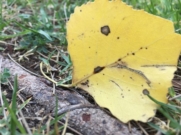 Yellow Leaf Day
