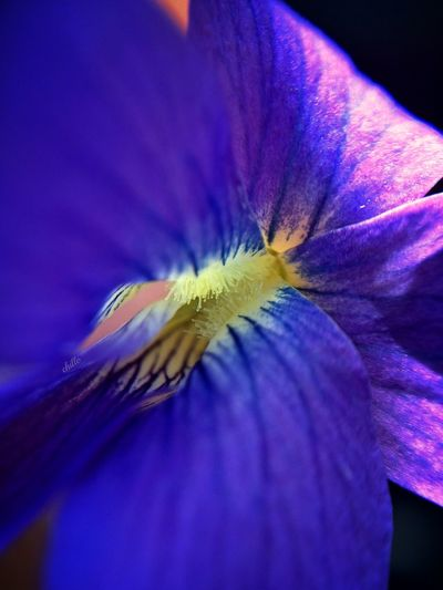 Marco Macro_collection Macro Photography Flowerporn Flowers Nature Beauty The Purist (no Edit, No Filter) Eye4photography  Soaking Up The Sun