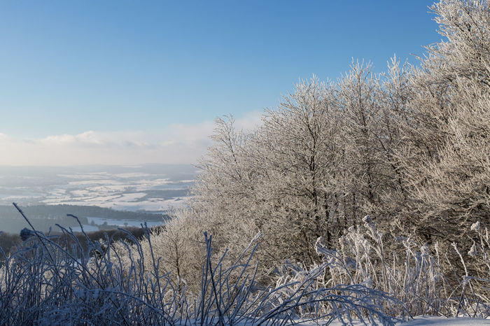 winter view from hoher meissner, north hesse Beauty In Nature Cold Temperature Day Growth Nature No People Outdoors Scenics Sea Sky Snow Tranquil Scene Tranquility Tree Water Winter