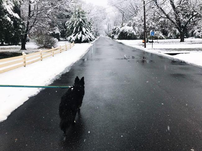 Snow day ❄️ #Winter #winter #wonderLand #Pets #MyDog #dogs #snow #snowday first eyeem photo EyeEm Ready   AI Now EyeEm Ready   EyeEmNewHere