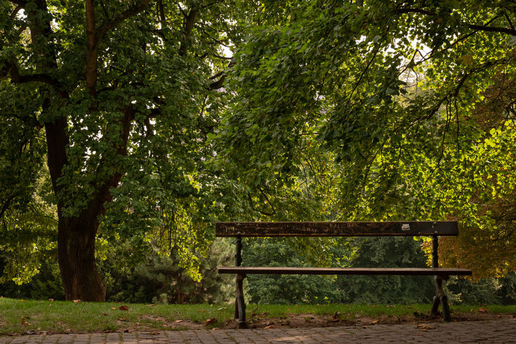 The bench Absence Beauty In Nature Bench Empty Forest Green Color Nature No People Outdoors Park Park - Man Made Space Park Bench Plant Seat Tranquil Scene Tranquility Tree