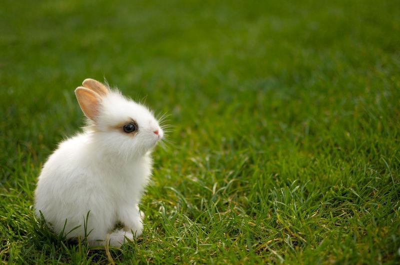 Cat on grassy field