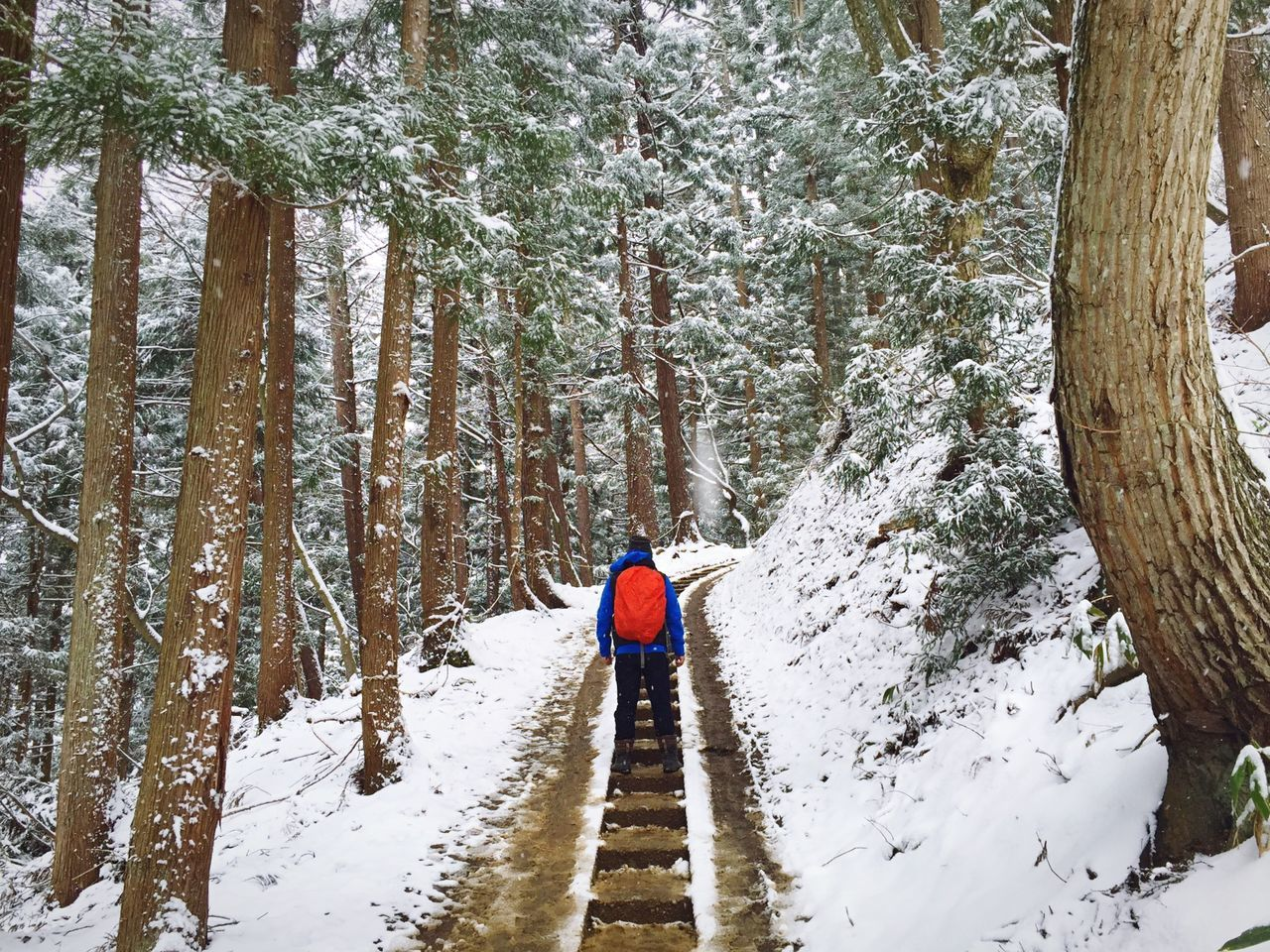 Rear view of person walking on staircase in snow covered forest
