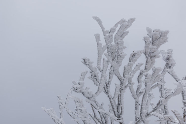 Minimal tree covered by frost with simple background Frost Ice No Filter Tree Winter Art Beauty In Nature Clear Sky Close-up Clouds Cold Cold Temperature Day Fog Frosty Minimal Mist Nature No People Outdoors Sky Snow Winter