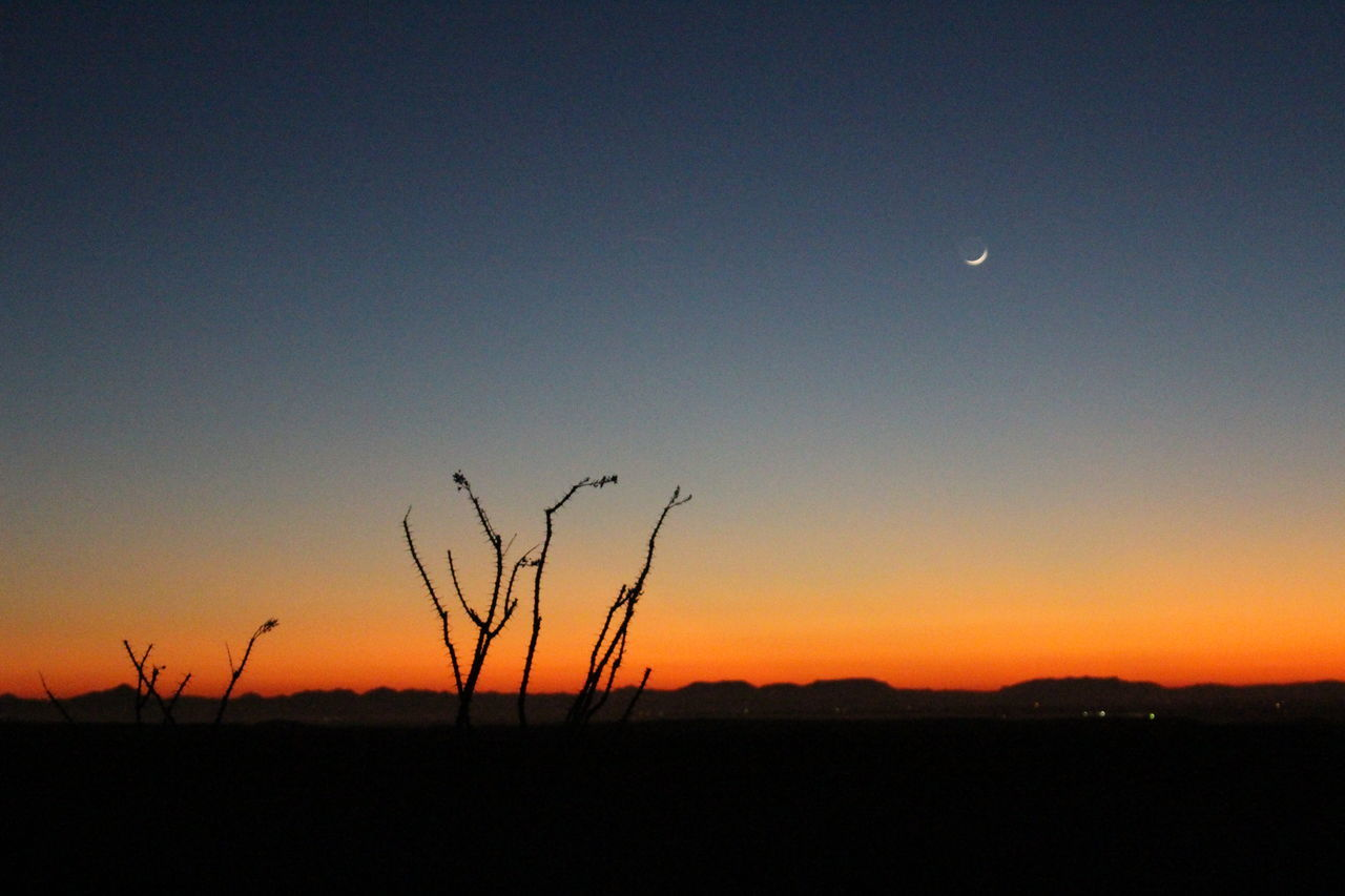 sunset, nature, moon, silhouette, beauty in nature, tranquility, landscape, tranquil scene, scenics, sky, growth, plant, no people, outdoors, night, clear sky