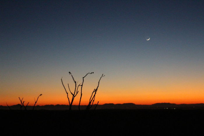 Sunset in the Arizona desert with an ocotillo silhouetted in the foreground Arizona Arizona Sunsets Desert Beauty In Nature Clear Sky Desert Beauty Growth Landscape Moon Nature Night No People Ocotillo Outdoors Plant Scenics Silhouette Sky Sunset Tranquil Scene Tranquility