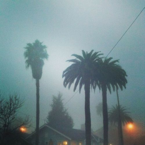 Palm trees in fog in Long Beach. Street Photographer based in Los Angeles and Long Beach. Losangeles La LBC Longbeach Photograph photography streetphotography socal orangecounty OC streetphotographer street DTLA pics アメリカ ロサンゼルス エルエー カリフォルニア 白黒 DTLBC streetshot streetphoto instamood
