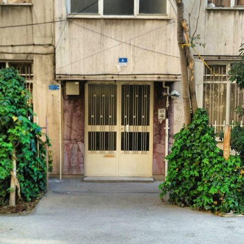 Oldhouse Tehran Tehranpic Iran Iranpics Streetlife Window Flowers ایران تهران تهران_گردی خیابان_پیروز پنجره پنجره_شعر_امروز خانه_قدیمی خانه_قدیمی_ایرانی معماری_ایران