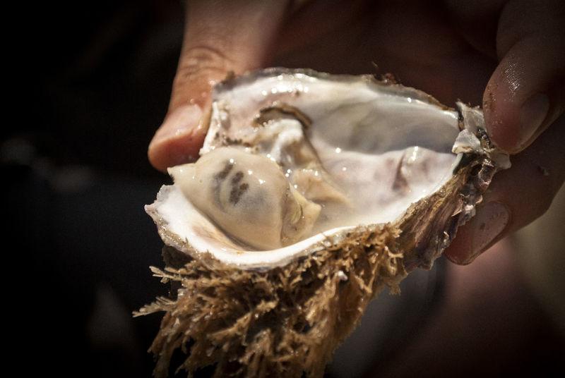 Austern Food Fresh Mosselbay Ocean Oyster  Oysterfarm Oysters Restaurants Seafood South Africa