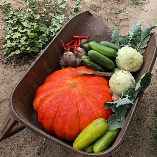Harvest Vegetarian Food Vegetable Garden Moestuin Home Grown Vegetable Vegetables Veggies Food And Drink Food Healthy Eating Vegetable Wellbeing Freshness High Angle View Pumpkin Root Vegetable Organic Variation