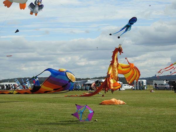 Animal Multi Colored Sky Bird Flying Outdoors Ballooning Festival