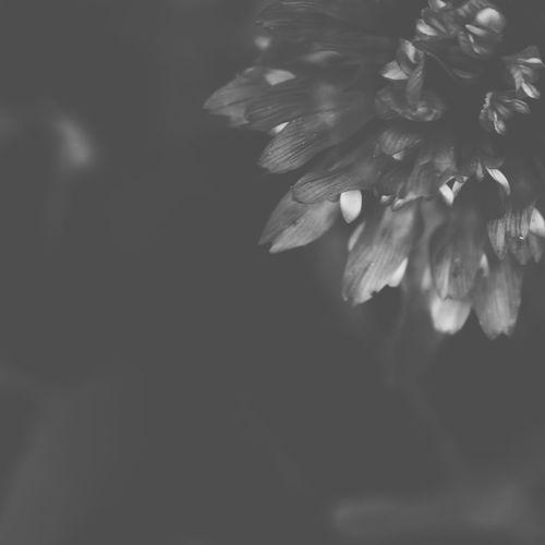 B&W Flower 1 B&w B&W Collection B&w Flowers Flower Flowers,Plants & Garden Macro Minimalism Nature Simplicity