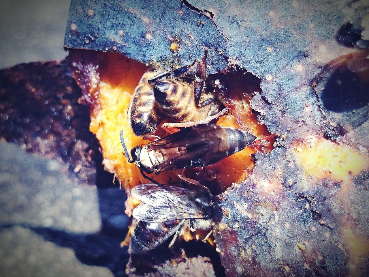 Bees Feeding On Rotten Mango