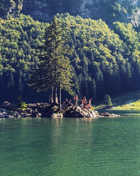 Boys swimming at Seealpsee in Appenzell, Switzerland. Forest Appenzell Seealpsee Swimmers Young Men Boys Swimming In A Lake Bathers Alpine Lake Water Tree Sea Plant Nature Beauty In Nature Waterfront Day Sunlight Outdoors Land Scenics - Nature