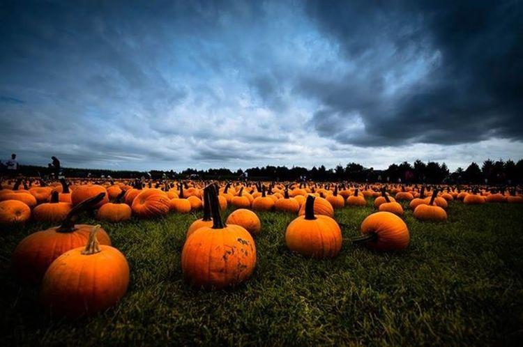 Long Island Pumpkins Pumpkinpicking Storm Clouds Storm Brewing October October2015