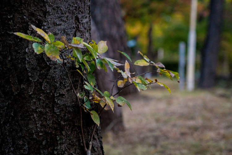 Streetphotography Street Plant Leaf Tree Tree Trunk Plant Part Trunk Focus On Foreground Growth Nature Close-up Day No People Green Color Beauty In Nature Outdoors Land Forest Fragility Selective Focus Tranquility Bark Leaves EyeEmNewHere