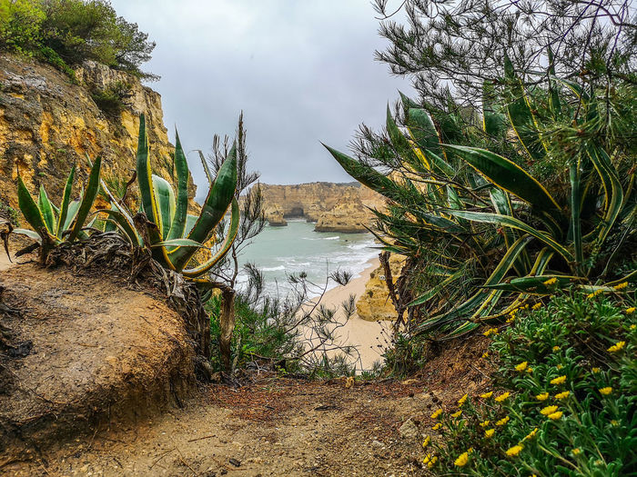 Praia da Marinha Praia Da Marinha Huaweiphotography Nature Photography Huaweip20pro Algarve Portugal Beach Life Is A Beach Ocean Empty Beach Oceano Mar Water Tree Sky Close-up Sand Sandy Beach Tranquil Scene Scenics Coast Calm Shore Springtime Decadence Stay Out