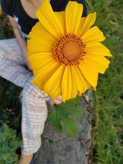 Sunflower for