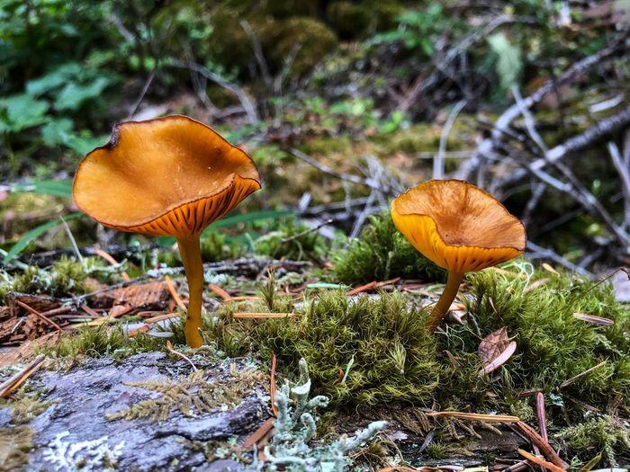 IPS2015Fall IPhoneography Mushrooms Moss Autumn Forest IPS2016Nature IPS2016Closeup