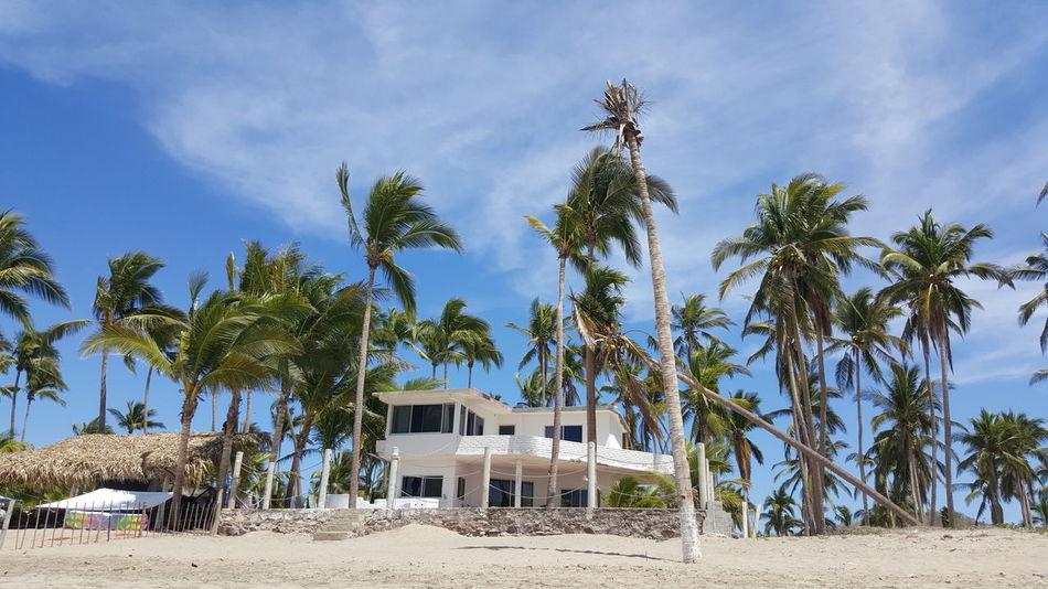 Simplemente en paz frente al mar... Beachphotography SS16 Relaxing BocaDeIguanas Palm Trees Relax :)