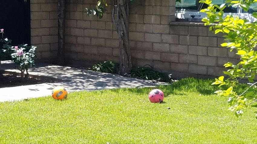 Natural Light Kickball Balls Family Fun Pink Grass No People Outdoors Green Color Street Photography Check This Out Enjoying The Sun Leisure Activity Shadow And Light Copy Space Fine Art Photgraphy Walking The Streets Still Life Photography Shadow Sunlight Simple Family Togetherness