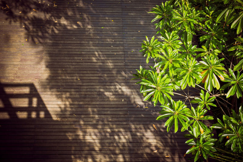 Sunshine on dark wooden floor with shadows of trees and a building in summer.
