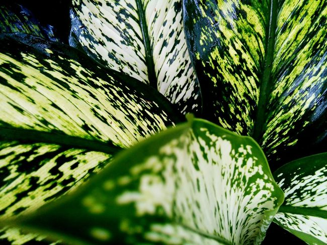 Leaf Nature Growth Green Color Plant Backgrounds Close-up Leaves Patterns Of Nature Patterns