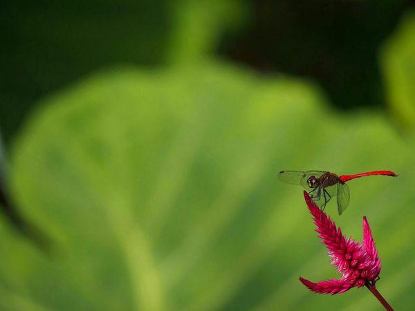 今日もお疲れさまでした😊 秋 トンボ Natural Eye Em Nature Lover EyeEm Best Shots
