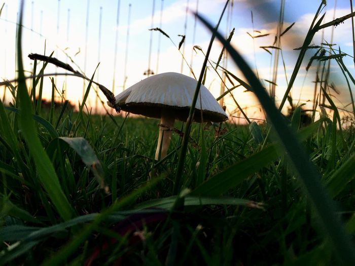 Relaxing Sunset Daily Mushroom Cute Photography Grass Iosphoto Breathing Fresh Air
