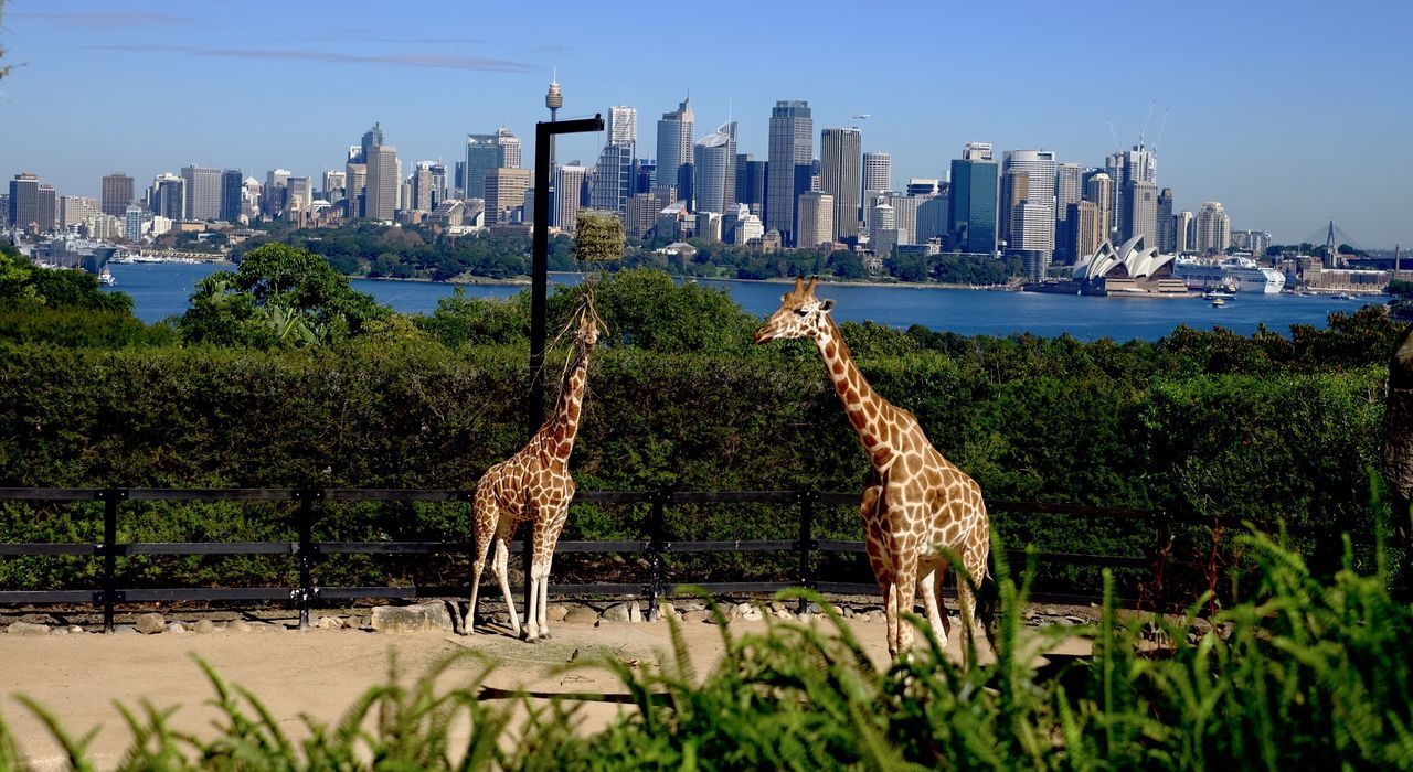 building exterior, city, architecture, built structure, skyscraper, outdoors, travel destinations, animal themes, day, no people, animals in the wild, urban skyline, cityscape, animal wildlife, nature, sky, tree, mammal, clear sky