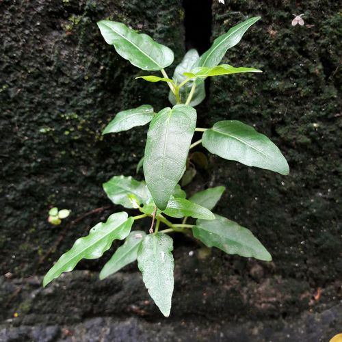 Leaf Green Color Plant Close-up No People Growth Outdoors Fragility Beauty In Nature
