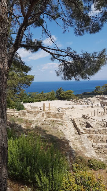 Tree Nature Walking Sunny Day No Filter, No Edit, Just Photography Beautiful Greece Relaxation Travel Destinations Greek History Ancient Civilization Ancient Ruins Ancient City Ancient Greece Ancient Kamiros Ancient Remains Rhodes Greece