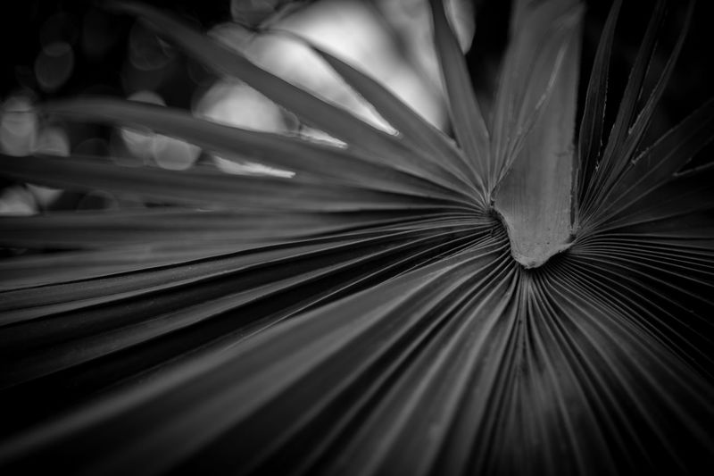 ©Amy Boyle