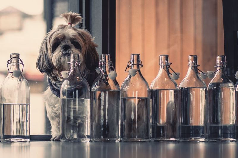 Portrait Of Dog Sitting By Bottle At Home