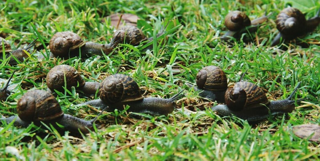 Snail Collection Snails Pace