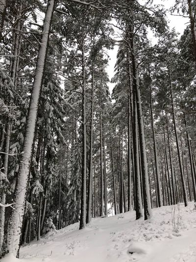 Tree Snow Winter Forest Nature Cold Temperature