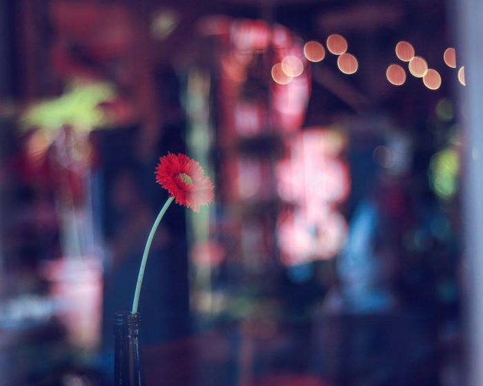 Hidden flower, hidden power Window Through The Window Flower Flowering Plant Plant Focus On Foreground Illuminated Night Defocused Close-up Outdoors Decoration No People Freshness Nature Fragility Christmas Christmas Lights Street Architecture Vulnerability  Beauty In Nature