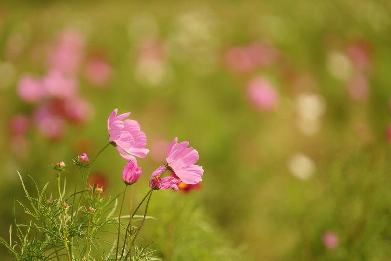 秋の風に吹かれて Flower