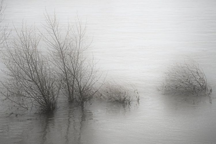B&w Nature Mystery Orton Effect River Simplicity Tranquil Scene Tranquility Winter