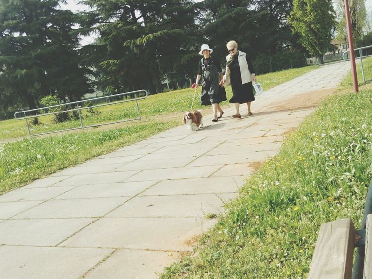 Pretty ladies Walking Down The StreetWalking The Dog Elderlypeople Seniors Sunnyday Life Style Old Friends King Charles Cavalier