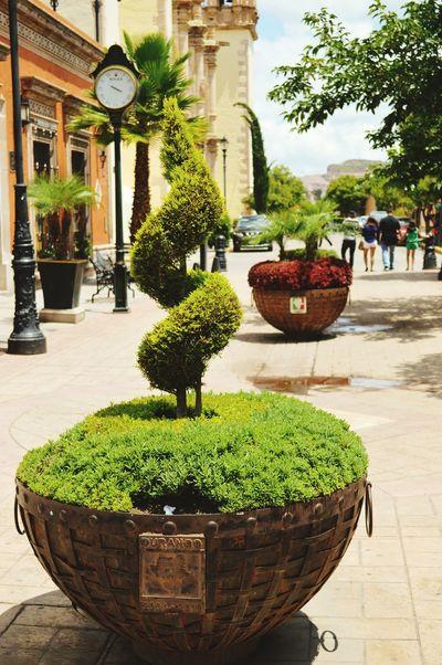Calor y de paseo Faces Of Summer Summer Mexico_maravilloso Mexico Somewhere In Mexico Hello World Sun Descubriendo Mi Ciudad Descubriendo Rincones Eye4photography