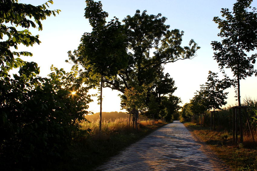 Beauty In Nature Day Diminishing Perspective Empty Empty Road Footpath Grass Growth Landscape Long Narrow Nature No People Outdoors Pathway Road Scenics Sky The Way Forward Tranquil Scene Tranquility Tree Treelined Vanishing Point Walkway