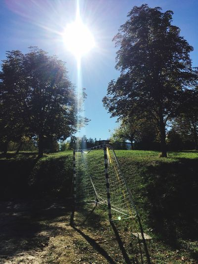 Sunshine EyeEm Best Shots - Nature EyeEmBestPics EyeEm Nature Lover Plant Tree Sky Sunlight Sun Fence Nature Sunbeam Boundary Barrier Sunny Growth Lens Flare Beauty In Nature Day Security No People Field Safety Tranquility