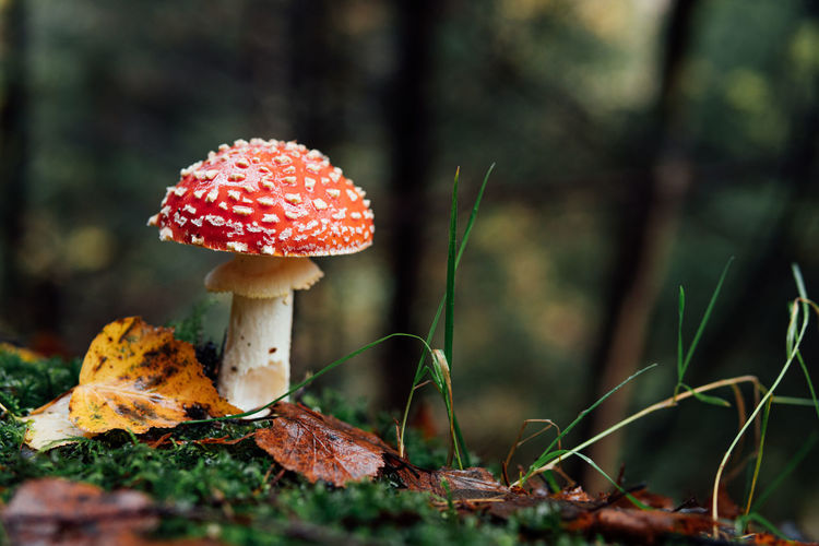 Mushroom in the dark forest