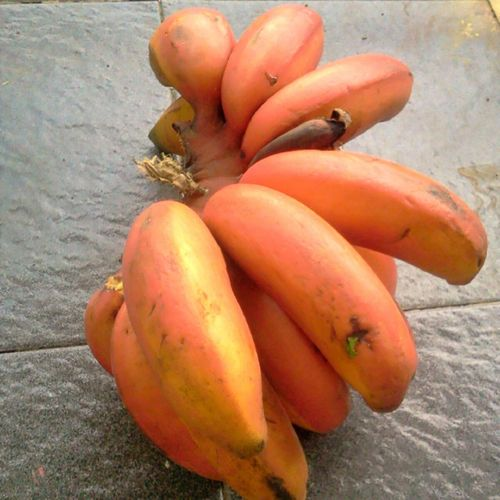 red banana . . pisang merah Fruits Banana Indonesian Fruit Tropical