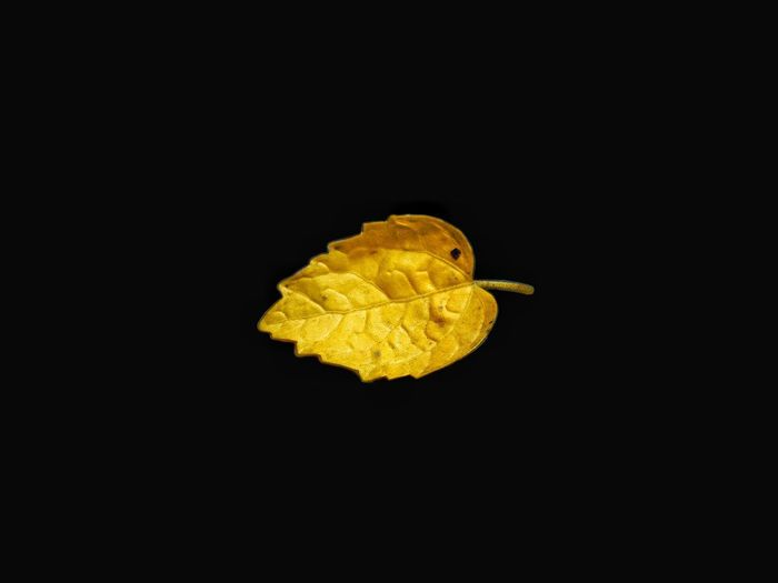 Dead but still beautiful.. 🍃 Leaf Single Single Leaf Yellow Leaf Pale #Nature  Beautiful Nature EyeEmNewHere EyeEm Best Shots EyeEm Nature Lover EyeEm Selects EyeEm Gallery EyeEm Best Edits EyeEm Best Shots - Nature EyeEm Best Shots - Nature EyeEm Team Eyeem Market EyeEm Best Edits EyeEmBestPics EyeEm Flower EyeEm EyeEm Gallery Leaf 🍂 Leaf Photography Nature Photography Black Background Yellow Science Biology Close-up This Is Strength Autumn Mood This Is Natural Beauty