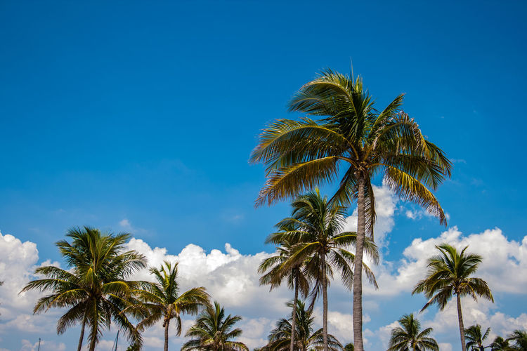 Fort Lauderdale  Beauty In Nature Coconut Palm Tree Day Growth Low Angle View Nature No People Outdoors Palm Leaf Palm Tree Plant Sky Tranquility Tree Tree Trunk Tropical Climate Tropical Tree